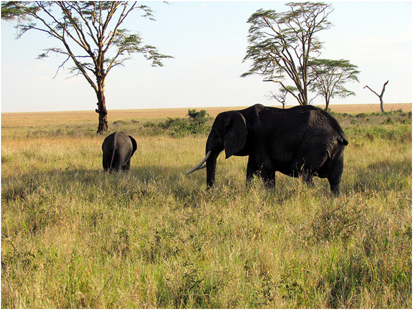 Explore Africa - when & where