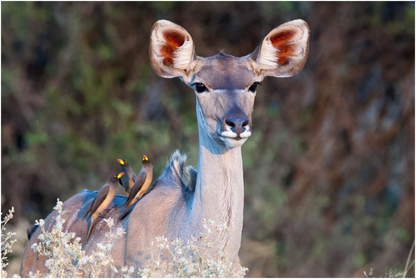 jungles-of-botswana1